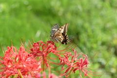 花と蝶CCCLXXIII!