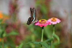 花と蝶CCCLXXXVIII!