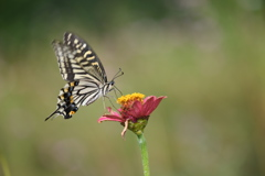 花と蝶CDVIII!