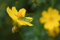 虫・昆虫と花LVIII!