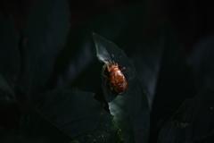 里山の昆虫XLI!