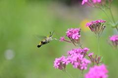 花と蛾Ⅰ!