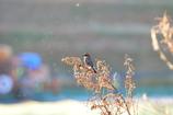 里山の野鳥XXVI!
