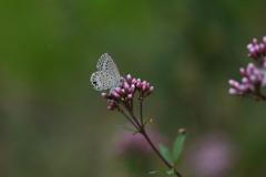 花と蝶CDXXXVIII!