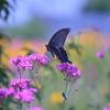 花と蝶Ⅳ!