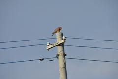 里山の野鳥XV!