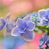 季節の花Ⅵ!