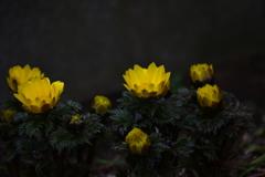季節の花LIV!