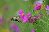 花と蝶LXXVI!