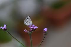 花と蝶CCCLXIII!