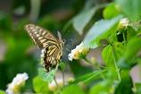 花と蝶LXXIII!