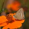 花と蝶CXXXIV!