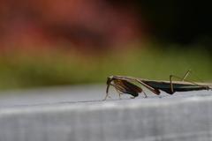 里山の昆虫XIV!