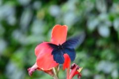 花と蝶LXXIV!