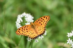 花と蝶CCCLXXXII!