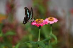 花と蝶CCCLXXXIX!