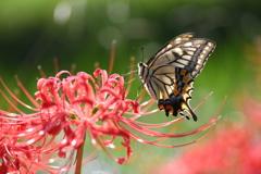 花と蝶CCCLXIX!