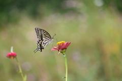 花と蝶CDVII!