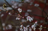 季節の花XLII!