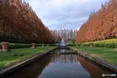 秋の公園 メタセコイア