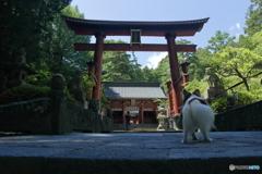 夏の富士五湖 �C 北口本宮冨士浅間神社