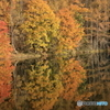 秋色日毎に深まる 御射鹿池②