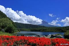 夏の富士五湖 ⑤ 西湖とサルビア
