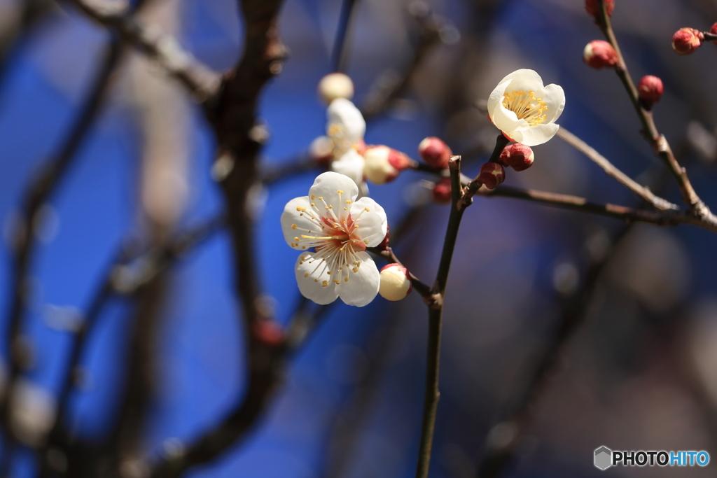 修善寺の春2