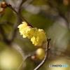 修善寺の春1