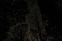 屋久島の夜