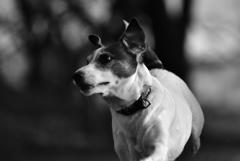 猟犬の資質