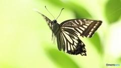 便利ズーム、昆虫化