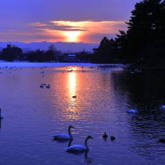 落陽の水辺にて