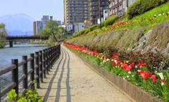 春の陽を歩む