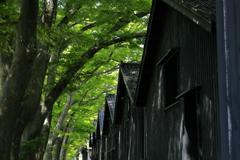欅並木と倉庫