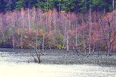 自然湖の晩秋