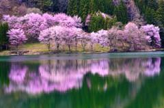 桜のほほえみ