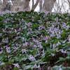 早春の妖精たち