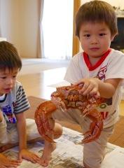 北海道ツーリングのお土産は蟹