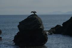 夫婦岩と鵜