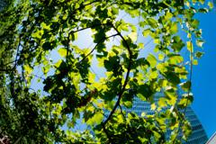 天空のブドウ畑