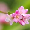 きれいに開いた川辺の花
