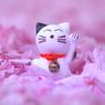 たーにゃん 桜に埋もれる !!!
