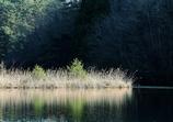 光と影のベニマンサク湖