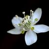 ♡春を告げる白い恋人♡