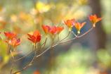 輝き始めた秋