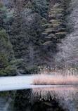 冬木立と凍ったベニマンサク湖
