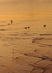 黄金の浜辺にて