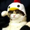 招き鶏猫☆チャー君♡
