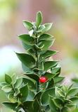 Nature Christmas tree ☆
